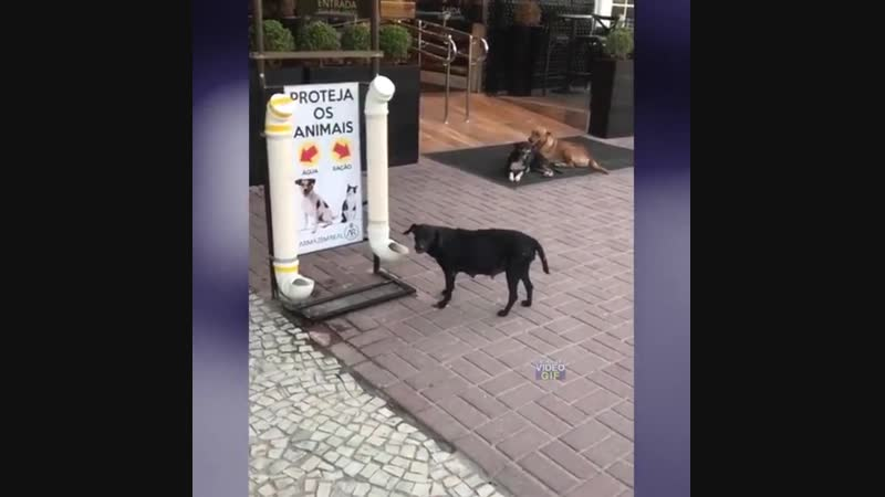 Кормушка для бездомных животных в Рио-де-Жанейро.
