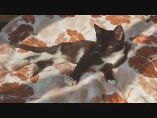 Котя :з /Нуарчик и солнечные процедуры/