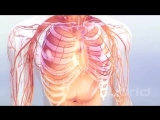 Анатомия человека своими глазами
