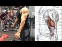Trabaja el Triceps de Forma Diferente con estos 12 Ejercicios para Triceps