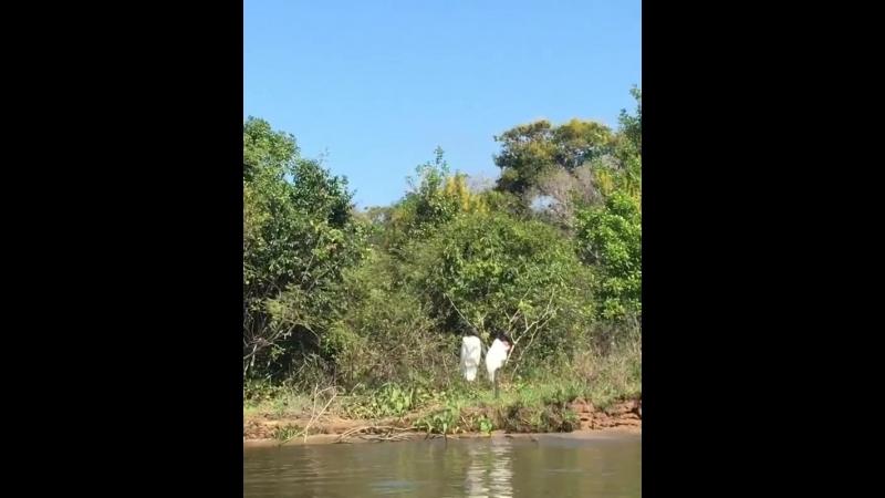 Pantanal Brazil Birds Tour