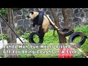 Panda Man Yue Mei Is Pissed Off For Being Caught In A Tyre | iPanda
