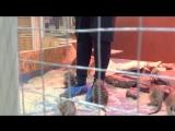 Любознательная семья Сурикатов - контактный зоопарк Мадагаскар