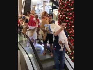Pet Weekend в торговом центре