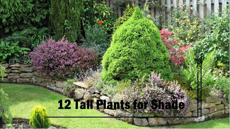 12 Best Tall Plants For Shade (details in descriptions)