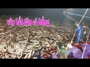 Cận cảnh quá trình vây bắt đàn cá hồng giá trị tiền tỉ -nhật ký đi biển15