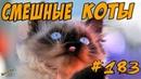 Приколы с котами Я РЖАЛ ПОЛ ЧАСА Смешные Коты и Кошки 2018