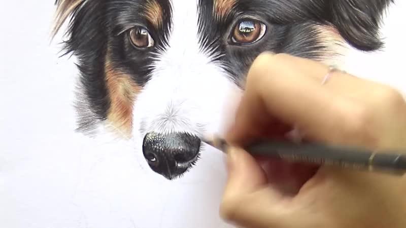 Как нарисовать нос собаки цветными карандашами