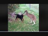 Собаки дружат с другими животными