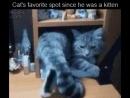 Любимое место кота с детства!