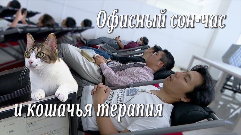 Офисный сон-час и кошачья терапия / Siesta and cat-therapy in Japanese companies / 日本の会社: 昼寝と猫セラピー