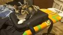 Рэп-батл унизил кошку