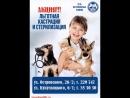 Льготная акция Кастрация и стерилизация собак и кошек