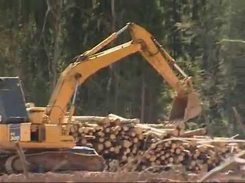 Вырубка леса Яхрома