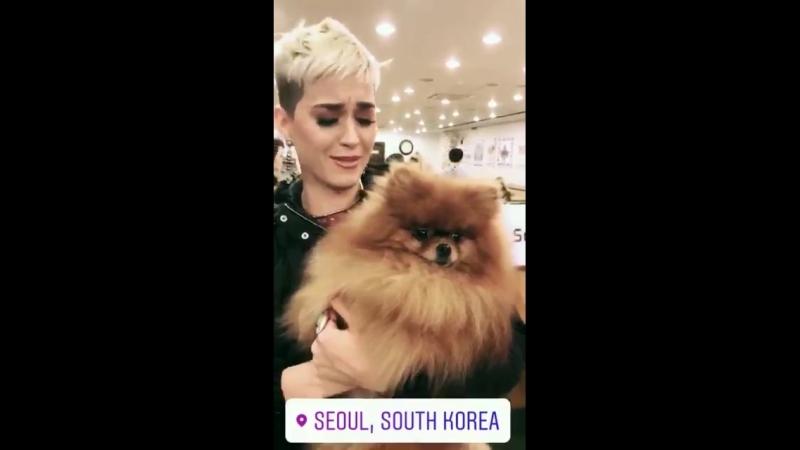 Katy at the Bau House Dog Cafe in Seoul 2