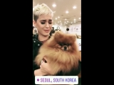 Katy at the Bau House Dog Cafe in Seoul #2