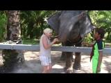 Elefant.mp4