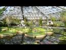 Ботанический сад Петра_2018. Водная оранжерея2