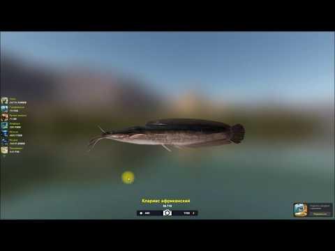 Кларис африканский трофейный экземпляр игра Трофейная рыбалка 2