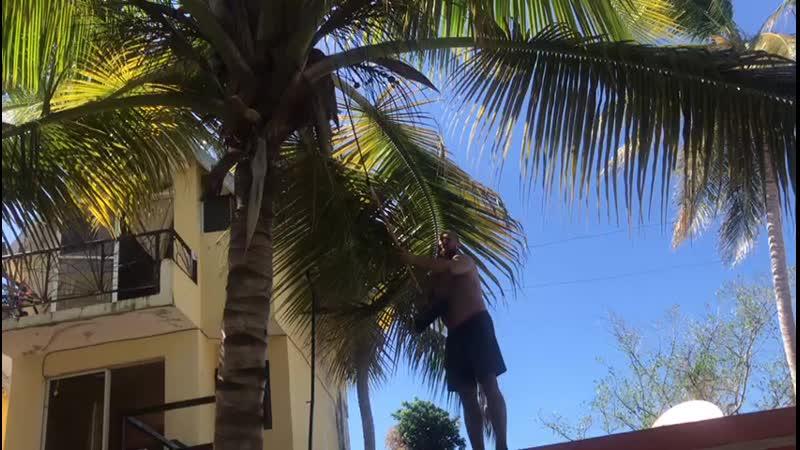 охота на кокосы