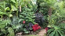 Springy's Steve Windswept exotic tropical garden in Abingdon on Thames UK