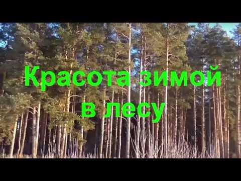 Красота зимой в лесу Мартьянов В.И.