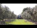 О производителе элитного оливкового масла Oli d Oliva Verge Extra