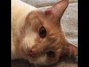 1271. 05.02.2016 нашел дом кот Мэлман (видео из дома)