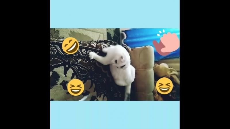 Мое видео с Клепой. 💜💜💜