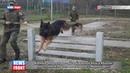 Военные кинологи российской военной базы в Абхазии приступили к подготовке к конкурсу «Верный друг»