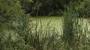 Целый лес в уфимском Инорсе постепенно превращается в болото