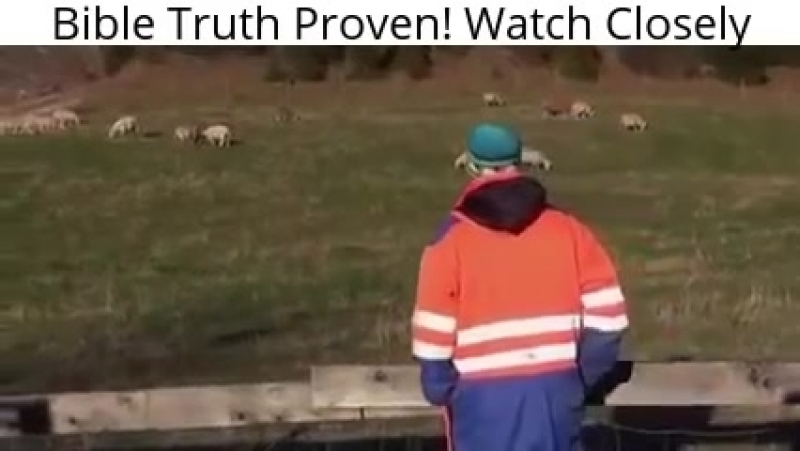 Заботливый пастух зовёт своих овец по именам выводит их и овцы слушаются её голоса