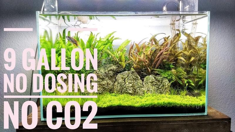 How To Create An Amazing Low Tech Aquascape   No CO2 No Dosing No Heater   Aquascaping