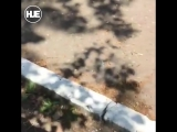 В Комсомольске-на-Амуре отец устроил разборки с одноклассником сына