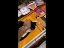 Кот в тц