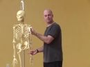 Anatomy for Yoga 4 The Pelvis