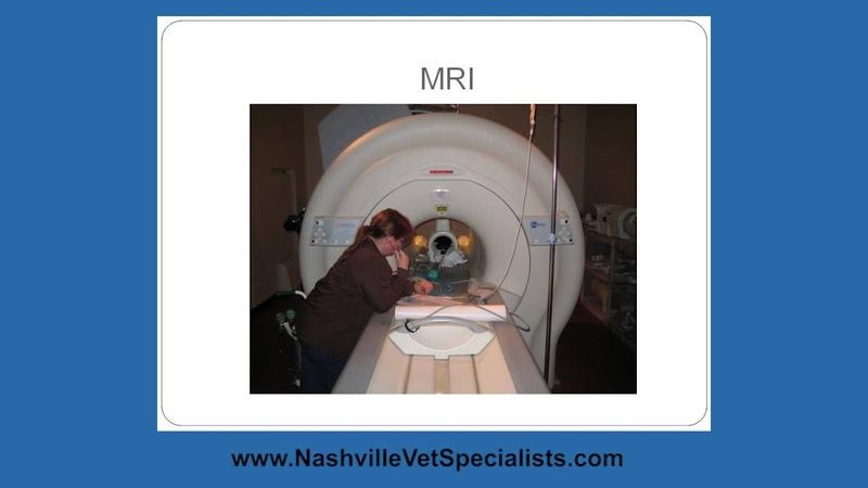 Inflammatory Brain Disease, Nashville Vet Specialists