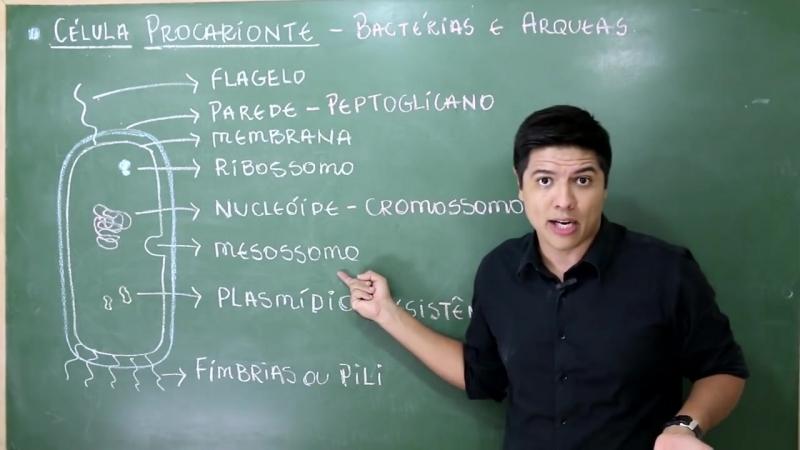 CÉLULAS EUCARIONTES X PROCARIONTES DIFERENÇAS Prof Kennedy Ramos