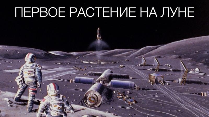 Первое растение на Луне: Новости высоких технологий