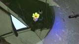 зимний поплавок цветок с раскрывающимися лепестками из пенопласта