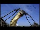 Шок видео! Самая большая змея в Мире Найдена в 2012 году ей 103 года