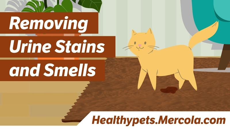 Удаление пятен и запаха мочи / Removing Urine Stains and Smells