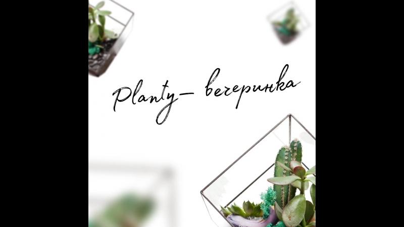 Planty в «Пряностях» на Белинского