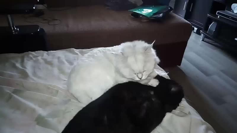мои коти