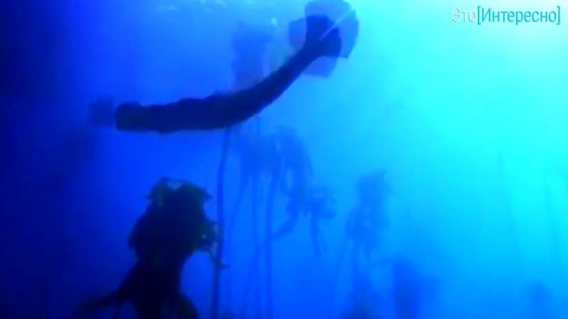 Сможет ли человек жить под водой