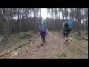 Видео массовый сруб деревьев в Чернобыле