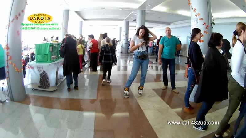 20102018, Харьков, Выставка кошек, RUI, Локомотив, часть 9, бенгал, фотосессия