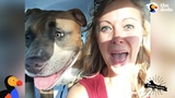 Pit Bull Dog Screams Like A Person When He's Happy The Dodo Pittie Nation