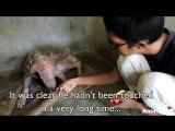 Спасатели подобрали у дороги несчастного пса. Казалось, что он уже умер, но через время его было просто не узнать!