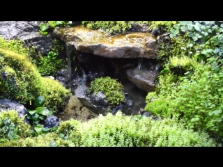 Waterfall_in_paludarium